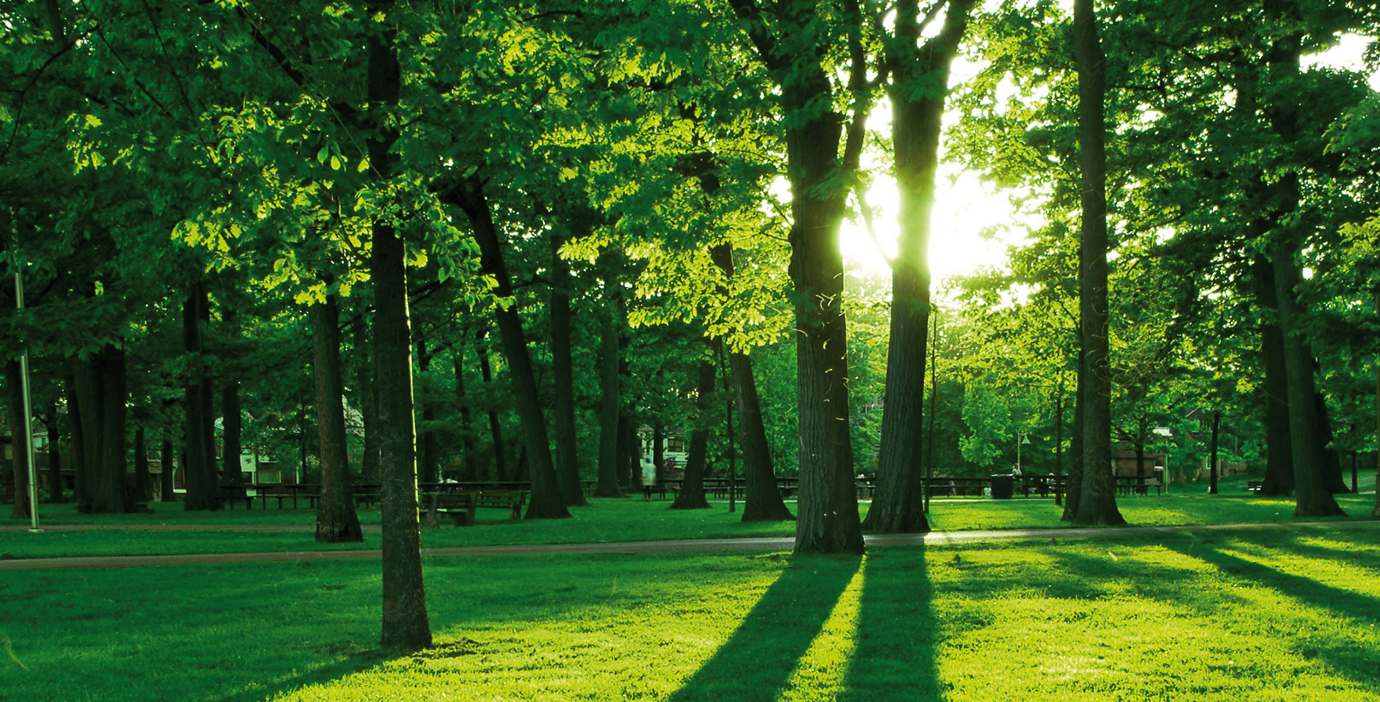 grüner-Park