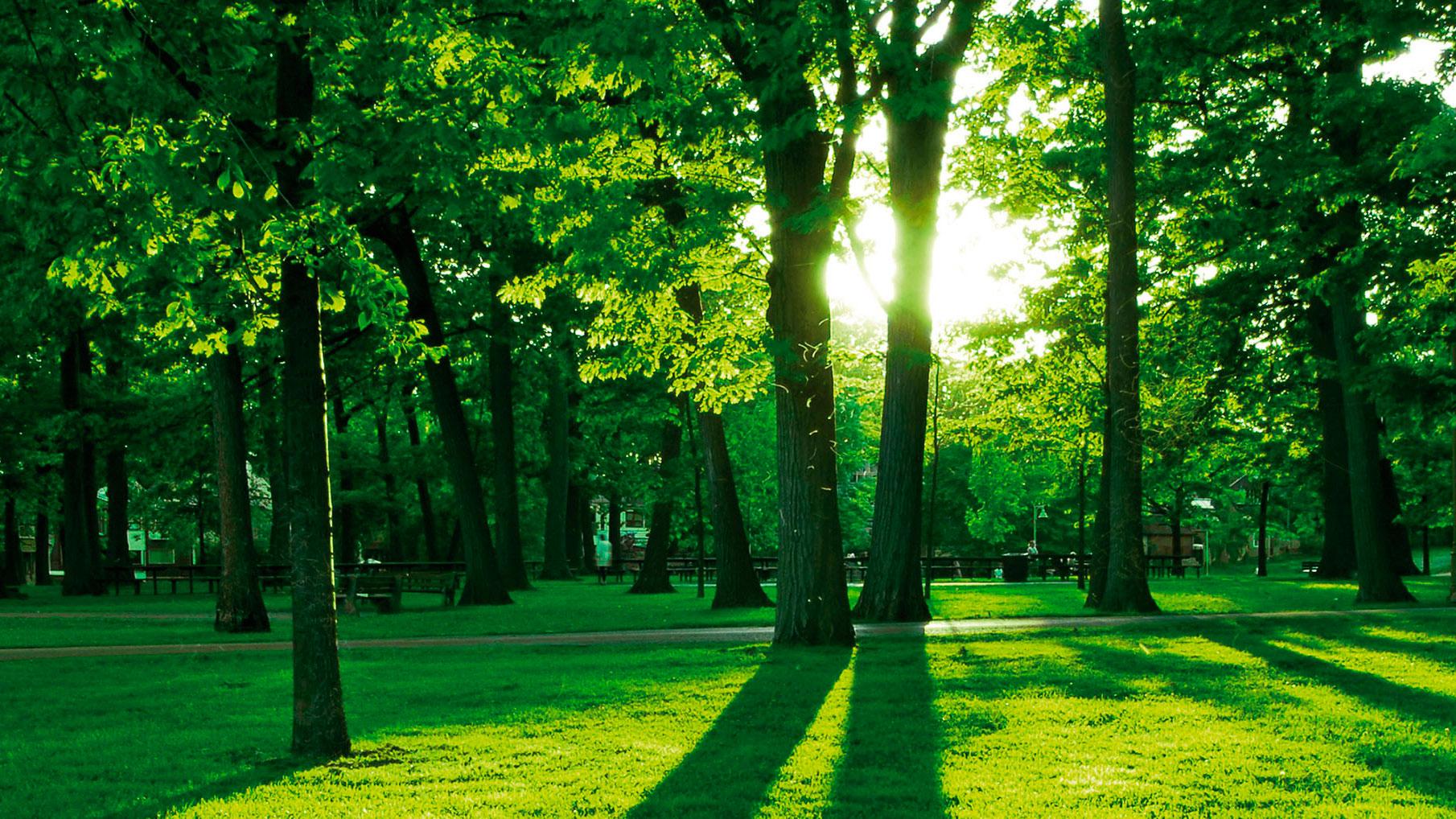 DummySlider_grüner-Park